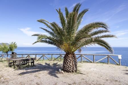 broadleaved tree: Fetofeia, resting place with palm, Iceland of Elba, Tuscany, Italy, Europe Stock Photo