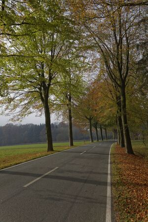 saxony: Country road with beech in autumn, Lower Saxony, Germany, Europe