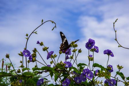 A beautiful butterfly on the flower in Chidambaram,Tamilnadu,India.