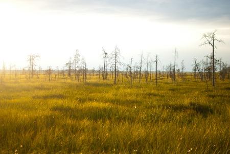 hatteras: Brilliant Green Wetland Marsh Grass Growing Under Blue October Skies