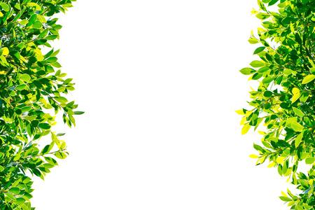 hojas antiguas: hojas de color verde sobre fondo blanco