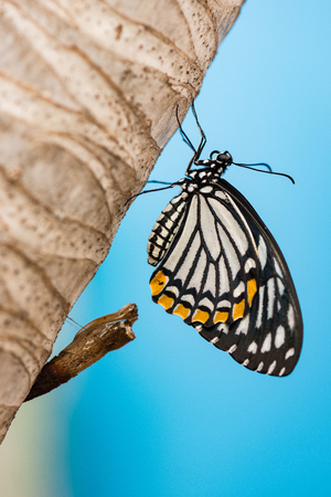 lifecycle: Butterfly Lifecycle Stock Photo