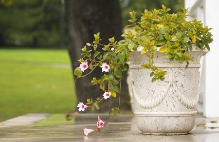 Old flower vase in a city park photo