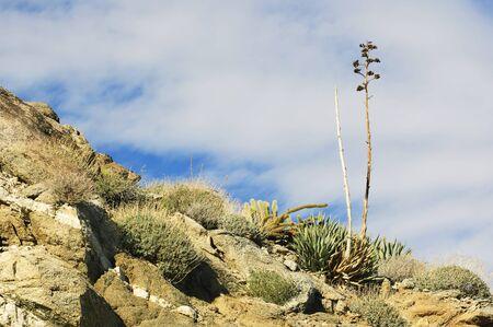 Anza Borrego Desert View (Southern California, USA) photo