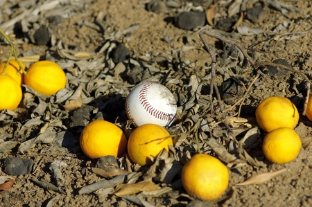 Baseball ball and oranges on a ground photo