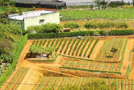 Vietnamese Central Highlands Agriculture (Da Lat, Vietnam)