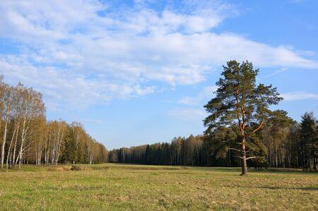 Peaceful European Spring Forest Landscape photo