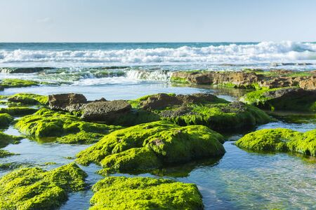Green Seaweed on Black Rocks Sea Landscape. Fresh Clear Water and White Waves Sunny Background.