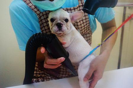 dog grooming photo