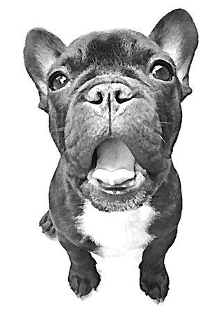 french bulldog: french bulldog pet smile vector