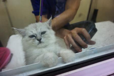 cat grooming: cat grooming