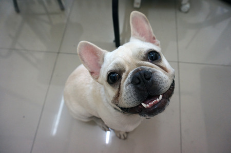 dog grooming: dog grooming Stock Photo