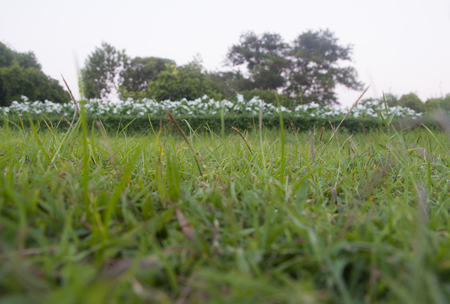 Green grass in a field, natural scene of a park in evening
