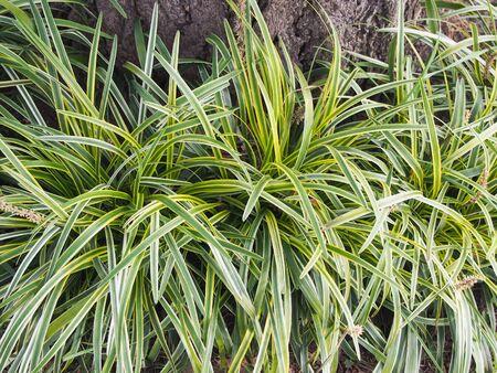 green plants: green plants