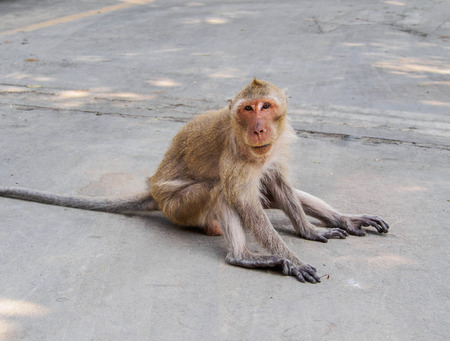 sitting on the ground: monkey sitting on the cement ground Stock Photo
