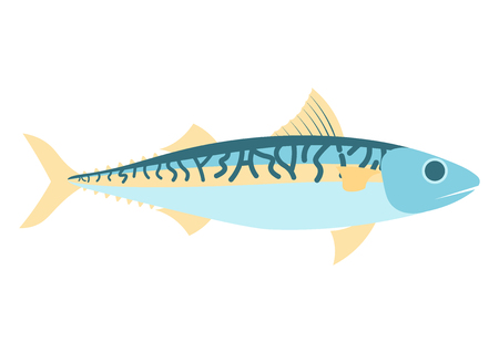 Mackerel fish vector illustration. Mackerel vector icon illustration. Mackerel isolated on white background. Mackerel isolated vector.