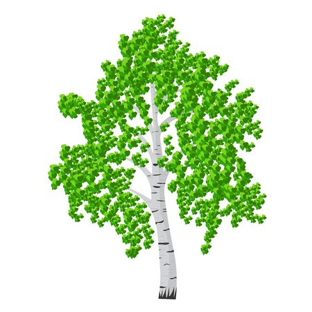 Birch tree isolalated vector illustration. detached tree birch with leaves on a white background
