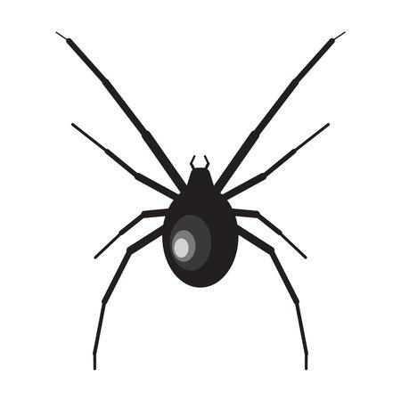 latrodectus: Black widow spider illustration. Spider on white background. Black widow vector. Spider illustration. Black widow spider isolated vector
