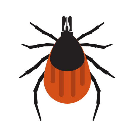 Mite bugs vector illustration. Mite isolated on white background. Parasite vector illustration. Parasite skin isolated vector.