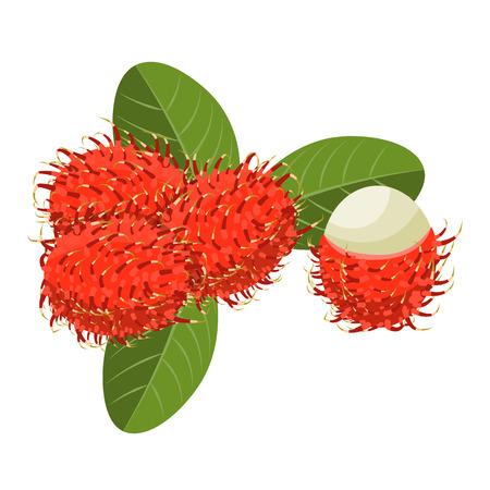 rambutan: Rambutan Isolated vector illustration. Composition of Rambutan on white background. Natural food.