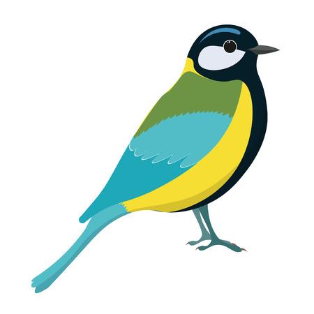 parus: Tomtit bird vector illustration. Titmouse. Vector illustration of tomtit isolated on white background.