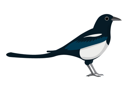 white bacground: magpie cartoon vector illustration. magpie isolated on white bacground