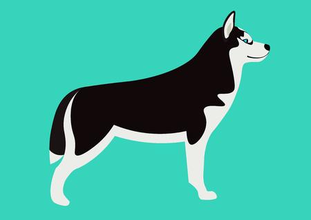 siberian husky: Siberian husky illustration. Isolated black and white Husky Illustration