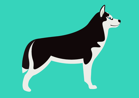 Siberian husky illustration. Isolated black and white Husky Illustration