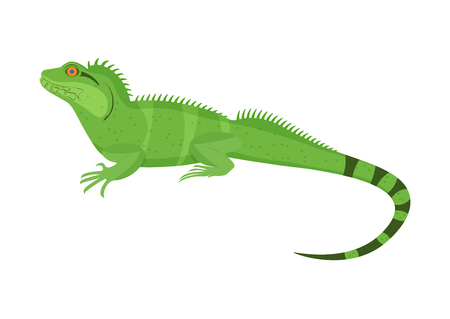 Chinese water dragon vector illustration isoladed on a white background Illustration