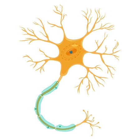 ilustración vectorial neurona aislada sobre un fondo blanco.