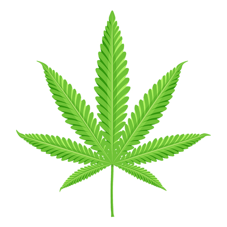 narcotic: Cannabis vector illustration. Marijuana isolated on a white background Illustration