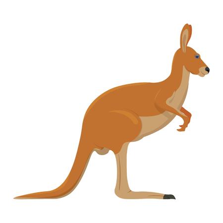 kangaroo white: Kangaroo illustration isolated on white background
