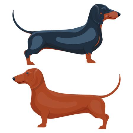 Dackel Haustier Vektor-Illustration auf einem weißen Hintergrund