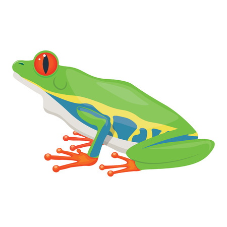 single eyed: Little tree frog vector illustration isolated on a white background
