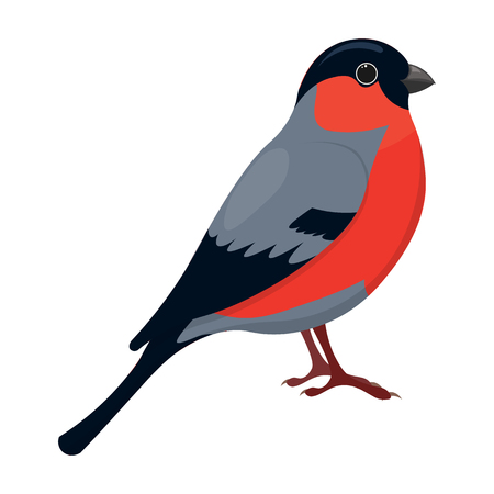 finch: Cartoon bullfinch vector illustration isolated on a white background