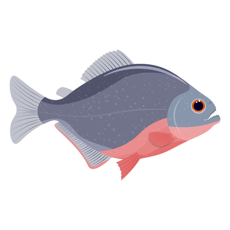 plunging: piranha fish vector illustration isolated on a white background