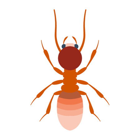 nuisance: Termite illustration. Termite isolated on white background Illustration
