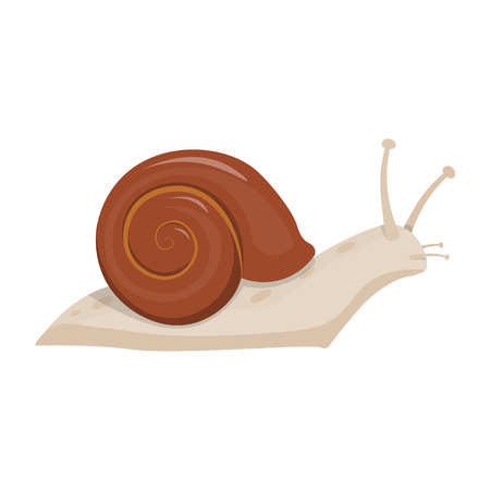 molluscs: Cute snail cartoon illustration. snail isolated vector Illustration