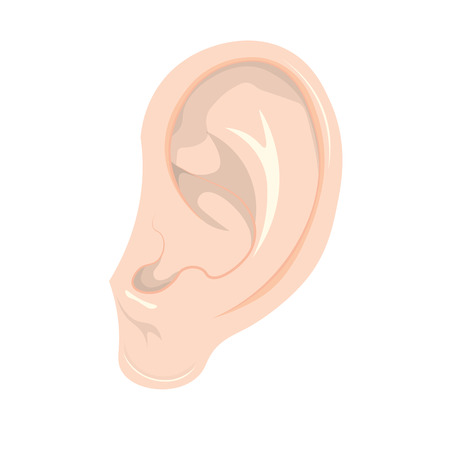 human ear vector Illustration. ear isolated on white background