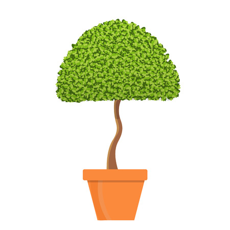 one trim: Tree in pot vector illustration.Isolated vector tree in clay pot