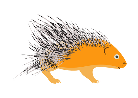 porcupine: porcupine vector illustration.porcupine isolated on white background. Illustration