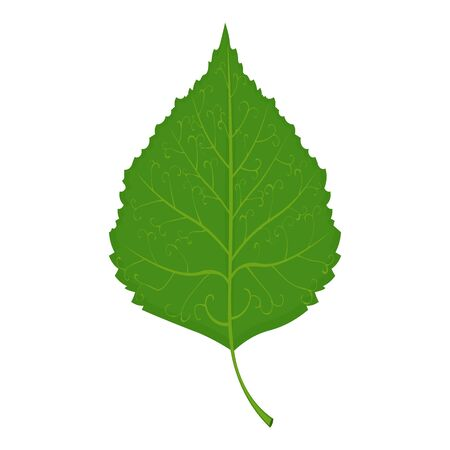 Green Birch leaf illustration isolated on a white background