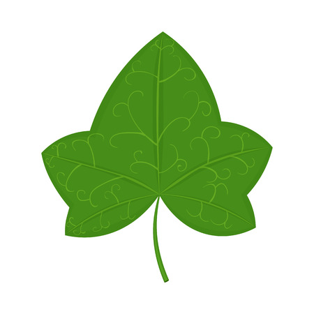 Green ivy leaf illustration isolated on a white background