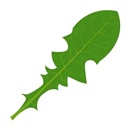 Green Dandelion leaf illustration isolated on a white background