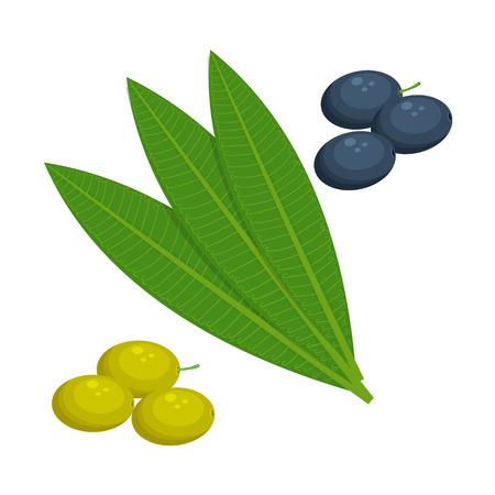 olives leaf illustration isolated on a white background