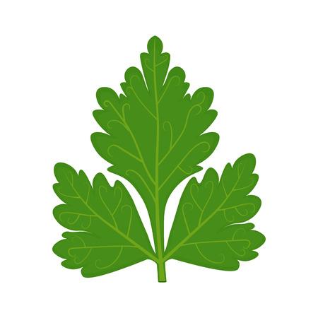 Parsley leaf illustration isolated on a white background Illustration