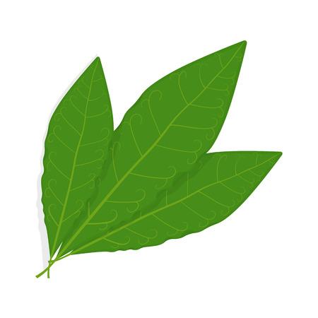 Bay leaf illustration isolated on a white background Vector Illustration