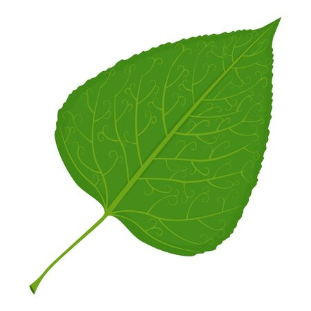 Green poplar leaf illustration isolated on a white background