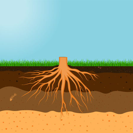 Tree with roots illustration isolated on a white background 向量圖像