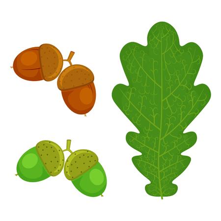 Oak leaf and Acorn illustration isolated on a white background